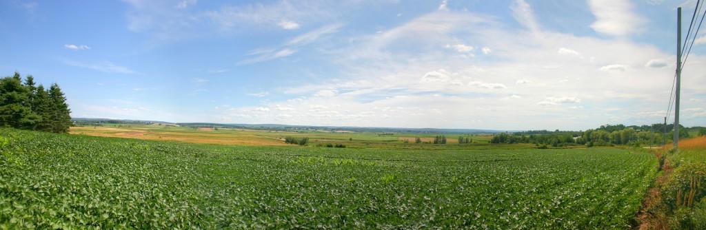 Farm-panorama-2200x717